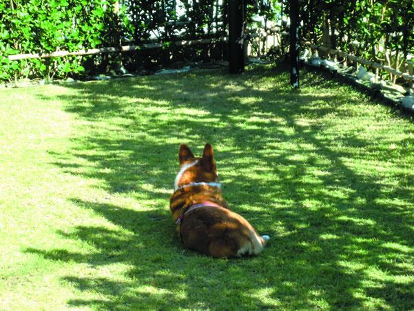 普段は中々入れてもらえない芝生のお庭にウットリ。